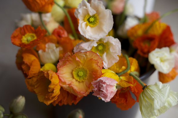 Florabundance Icelandic Poppies