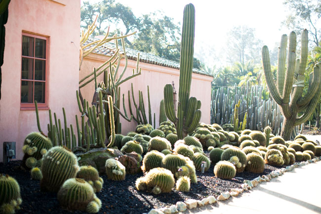 Florabundance Design Days 2015 - Lotusland - one of the cactus gardens.