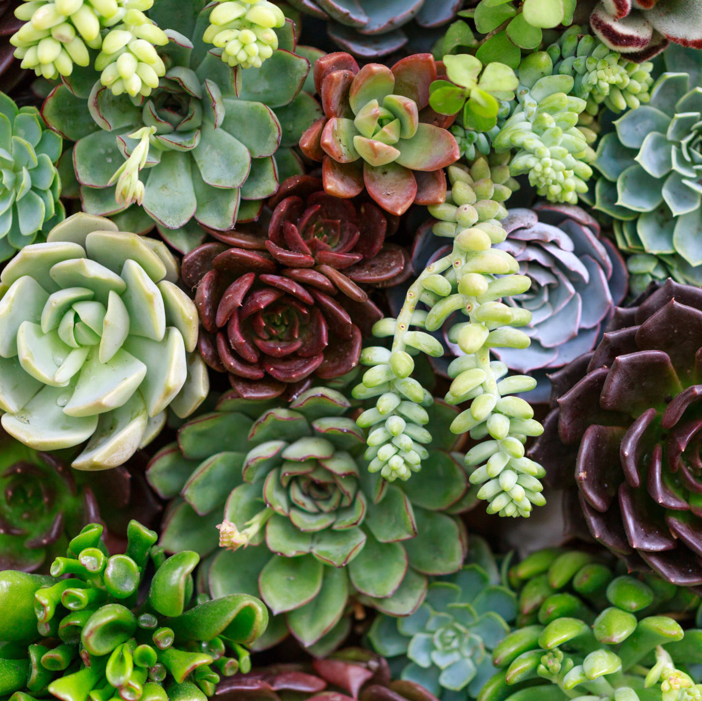 Keep Wedding Flowers Fresh! How to care for DIY Wedding Flowers