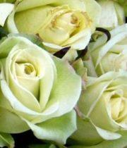Rose, Jade-SA