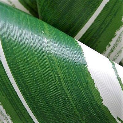 ti-leaf-variegated