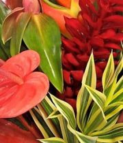 Tropical Mixed Bouquet