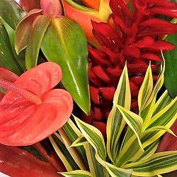 tropical-bouquet-mixed