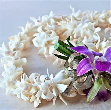 wholesale flowers | orchid- single lei white