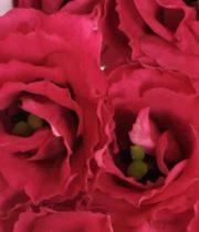 Lisianthus-red