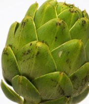 Artichoke, Large-green Stem