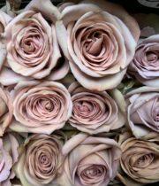 Rose, Amnesia-SA