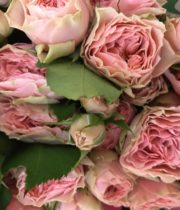 Rose Garden Spray, Pink Antique Romantica-CA