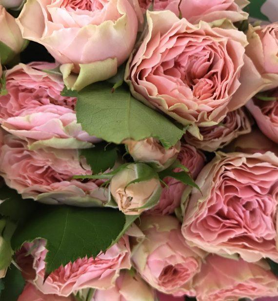 Antique Romantica Spray Roses