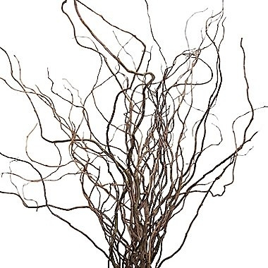 CURLY-WILLOW-BRANCHES-LONG-GREENERY