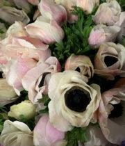 Anemones-blush