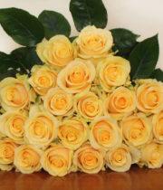 Rose, Butterscotch-SA