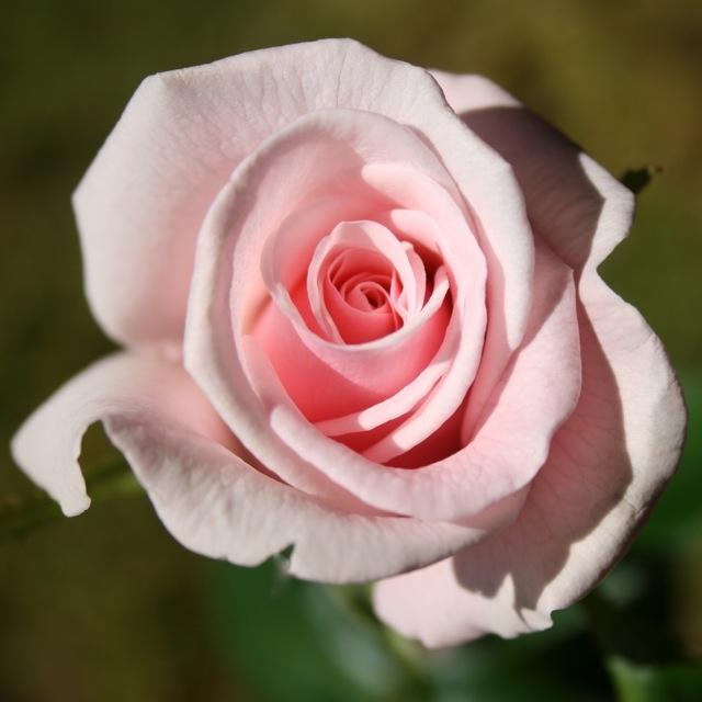 Rose_Valerie