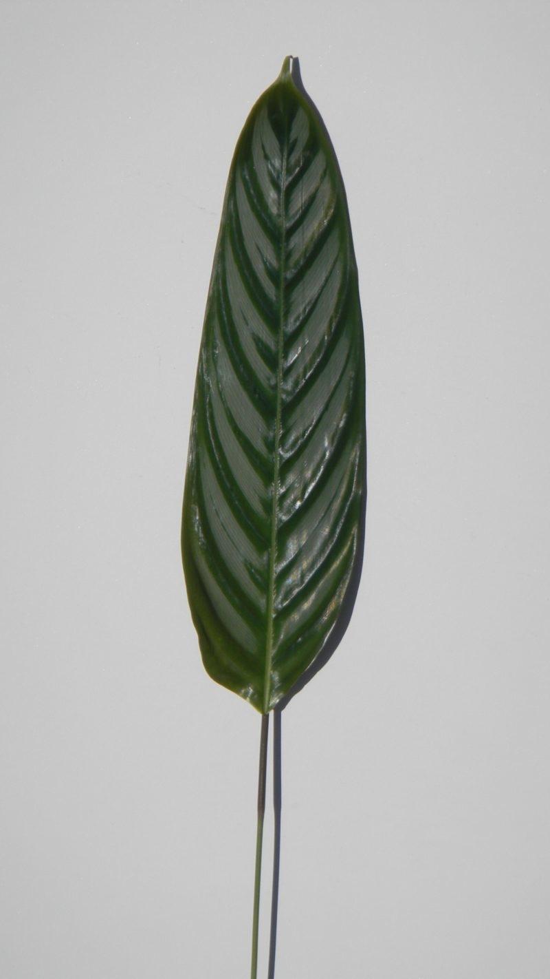 wholesale flowers | calathea leaf medium