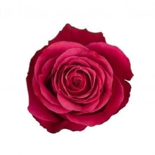Cherry O Rose