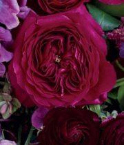 Rose Garden, Darcey-SA