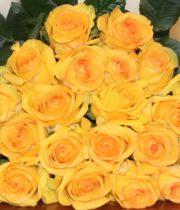 Rose, Deja Vu-SA