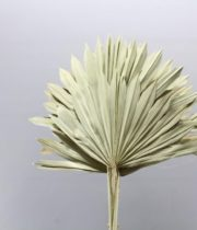Dried Fan Palm-natural