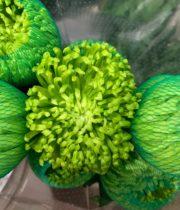 Mum, Disbud Spider-green