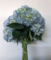 Hydrangea-light Blue (10 Stems)