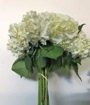 Hydrangea-white (10 Stems)