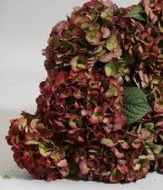 Hydrangea, Antique-green/red