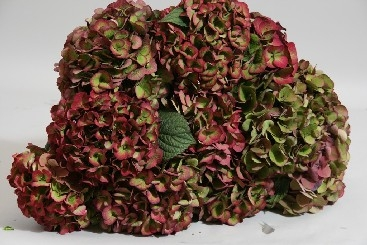 wholesale flowers | Hydrangea Antique- red