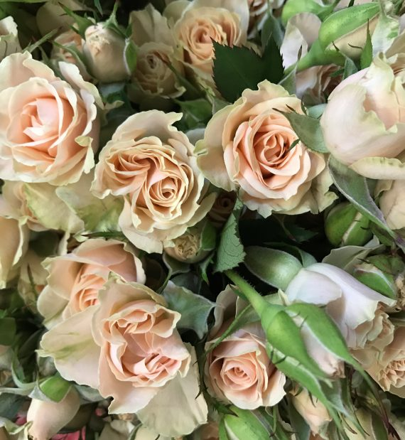 Jelena Spray Rose