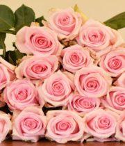 Rose, Jessica-SA