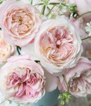 Rose Garden, Keira-SA