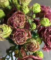 Lisianthus, Doubles-Deep Brown-chocolate