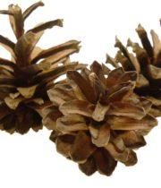 Pinecones, Lodgepole-mini (1000/case)