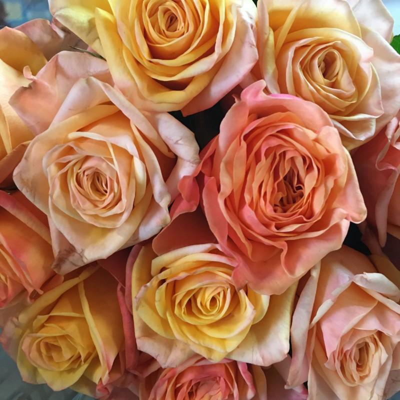 Lovely Hearts Rose