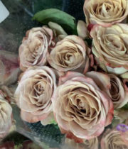 Beige Cappuccino Roses