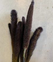 Millet-black
