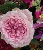 Rose Garden, Miranda-CA