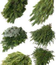 Mixed Holiday Greens, 15lb Case
