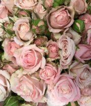 Rose Spray, Muscadet-CA