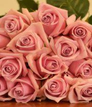 Rose, Nautica-SA