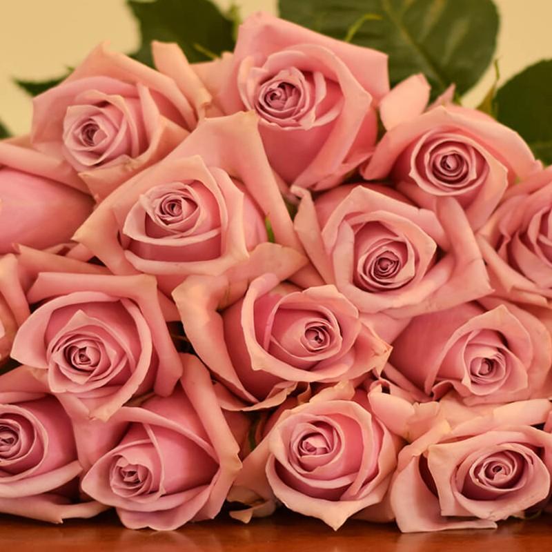 Nautica Rose