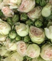 Rose Garden Spray, Pearl Gem-CA