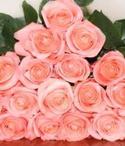 Rose, Peckoubo-SA