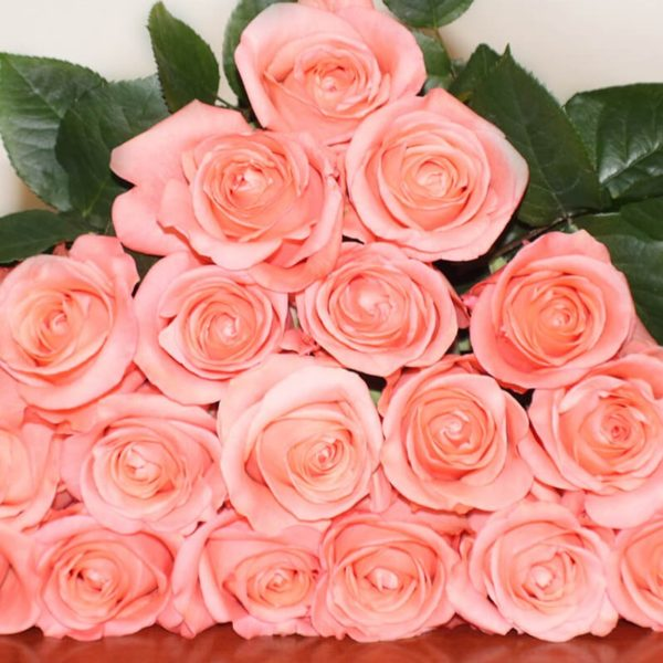Peckoubo Rose