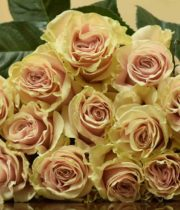 Rose, Pink Mondial-SA
