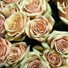 wholesale flowers | rose golden mustard
