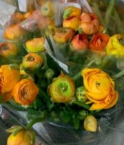 Ranunculus, Tecate-orange