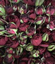 Rose Garden Spray, Red Lace-CA