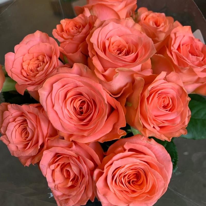 Romanza Roses