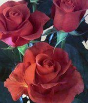 Rose, CA-Terracotta