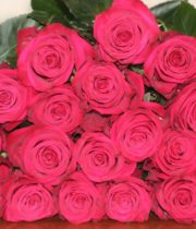 Rose, Roseberry-SA